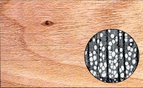 Strutture in legno,ciliegio-Caratteristiche tecniche del legno ciliegio